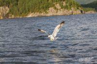 20130808_Urlaub_Norwegen-1225_LR