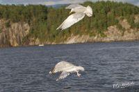 20130808_Urlaub_Norwegen-1287_LR
