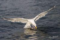 20130808_Urlaub_Norwegen-1291_LR
