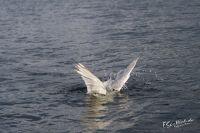 20130808_Urlaub_Norwegen-1293_LR