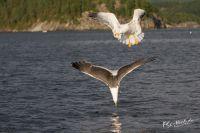 20130808_Urlaub_Norwegen-1319_LR