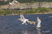 20130808_Urlaub_Norwegen-1362_LR
